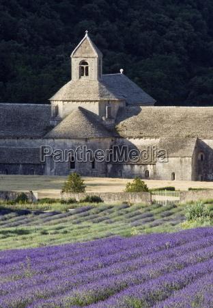 abbey de senanque and lavender fields