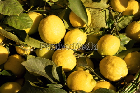 close up of lemons in the