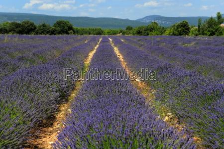 landwirtschaft ackerbau feld sommer sommerlich europid