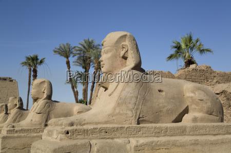 avenue of sphinxes luxor temple luxor