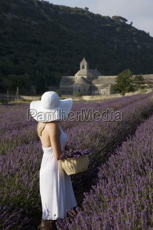 woman in a lavender field senanque