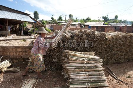 frau buendel von bambus bereit fuer