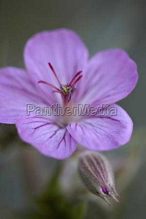 farbe blume pflanze gewaechs nationalpark bluete