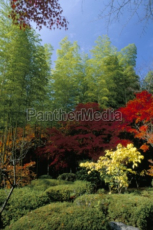 autumn maples teyu ji temple arashiyama