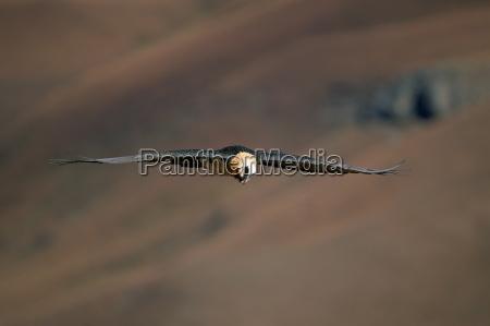 fahrt reisen farbe tier vogel afrika