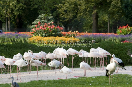 wilhelma zoo and botanical gardens stuttgart