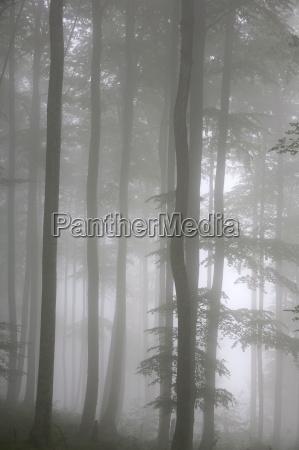 trees in fog saint jean pied