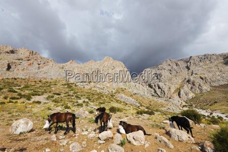 ala daglar national park cappadocia anatolia