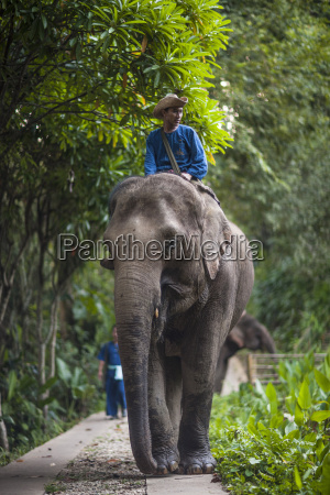 four seasons elephant camp northern thailand