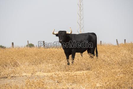 raging bull auf dem land