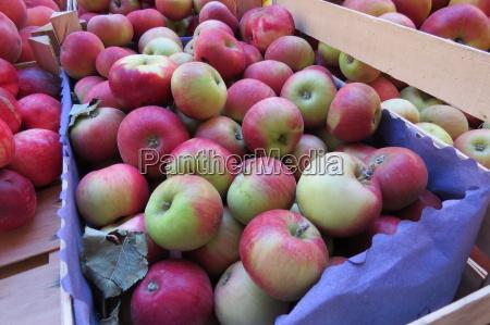 fruechte frucht obst aepfel apfel rot