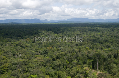 aerial view over the rainforest of