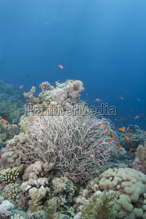 tropical coral reef with a sea