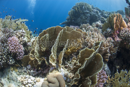 tropical coral reef scene in natural
