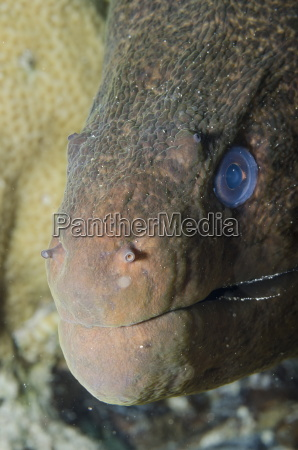 close up of the head of