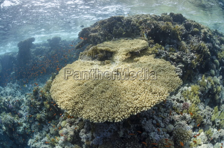 tropical coral reef scene with a