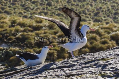 fahrt reisen vogel wild tierportrait horizontal