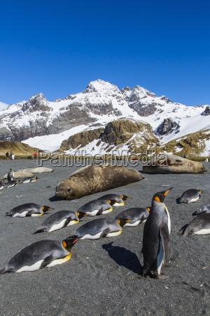 fahrt reisen vogel wild hafen pinguin