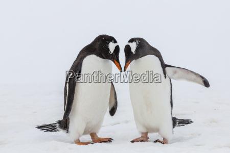 fahrt reisen farbe vogel antarktis hafen