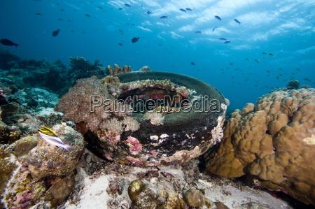 coral encrusted tyre at nalusuan marine