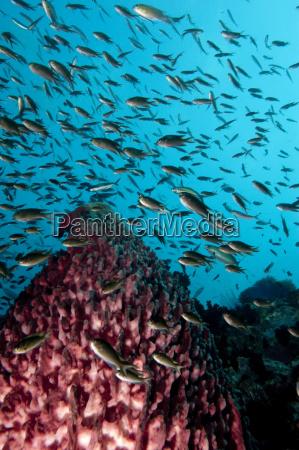 reef scene with vase sponge and