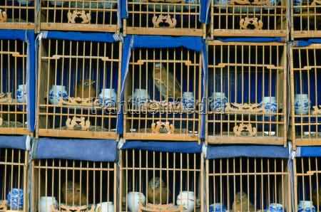 fahrt reisen kultur farbe tier tiere