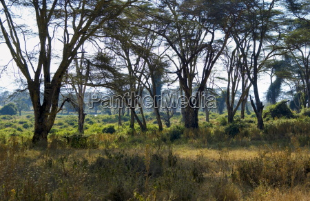 lerai forest ngorongoro crater tanzania