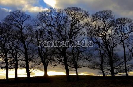 baum silhouettes peak district