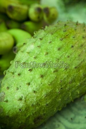soursop annona muricata a fruit grown
