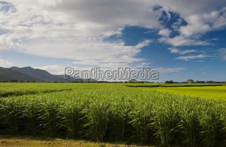 zuckerrohrfeld suesswasser verbindung australien