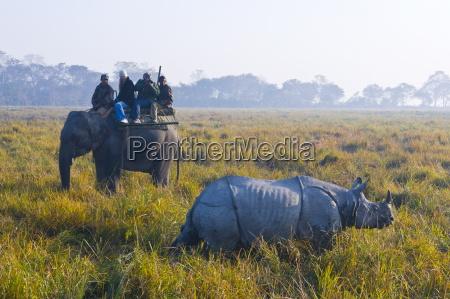 tourists on an elephant watching an