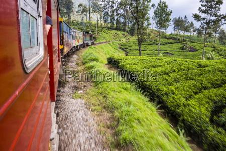 train journey through tea plantations haputale