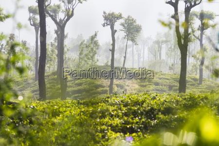 suise at tea plantations haputale sri