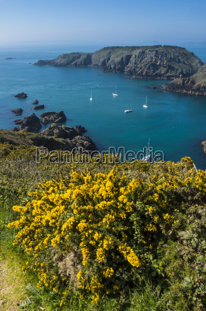 gorse blooming on the west of