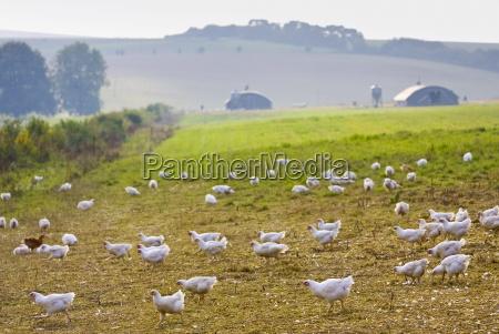farbe vogel landwirtschaft ackerbau freiheit ungebundenheit