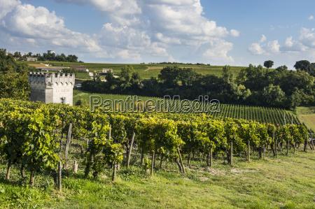 view over the vineyards unesco world