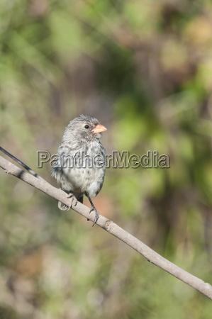 fahrt reisen farbe tier vogel tiere