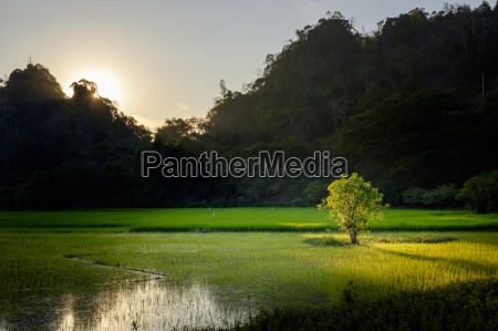 rice field in karstic landscape hpa