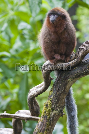 baum tier braun braeunlich bruenett wild
