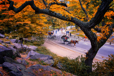 carriage ride central park new york
