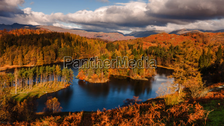 autumn morning at tarn hows in