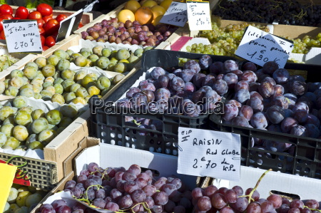 plums grapes and greengages fresh fruit