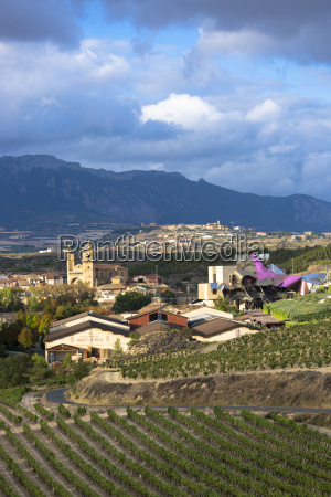 marques de riscal bodega winery vines