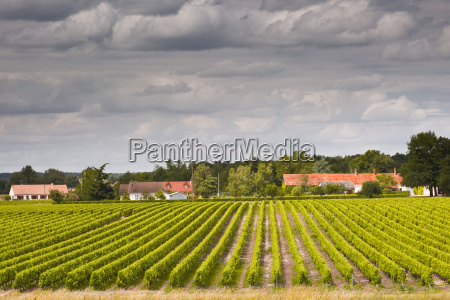 vineyards near chemery loir et cher