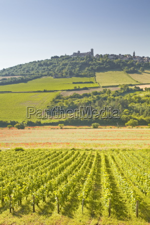 vineyards near to the hilltop village