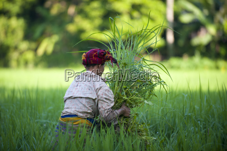 a woman clears away grass from