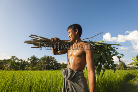 a farmer carries some sticks to