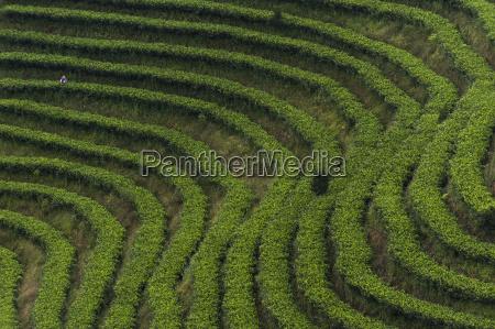 tee fahrt reisen landwirtschaftlich farbe asien