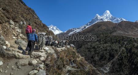 fahrt reisen sport stein tier saeugetier
