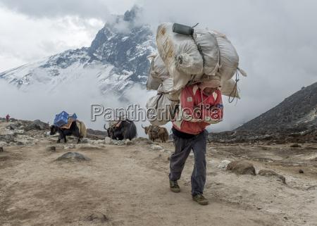 nepal himalaya khumbu dughla carrier and